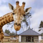 Nederlands beste attractieparken vind je in Noord-Brabant
